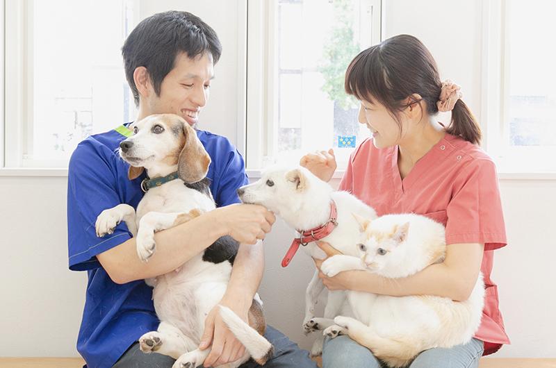 私たちと一緒に動物たちの健康を守りませんか?